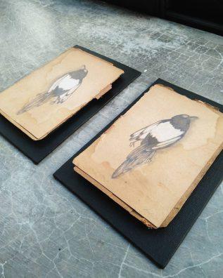 2 dead birds