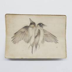 dead magpies